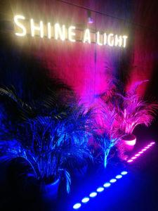 Neon rośliny