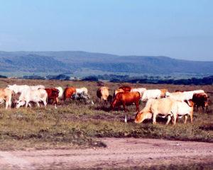 Afryka Wschodnia rolnictwo 2
