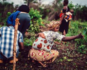 Afryka Wschodnia rolnictwo